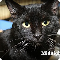 Adopt A Pet :: Midnight - Springfield, PA
