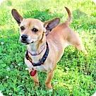 Adopt A Pet :: TIQUILA