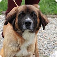 Adopt A Pet :: Harriet - Greensboro, NC