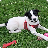 Adopt A Pet :: Chandler - Rochester, MN