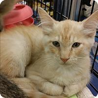 Adopt A Pet :: Carter - Marietta, GA