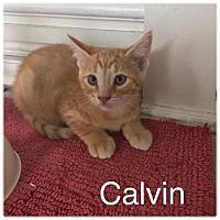 Adopt A Pet :: Calvin - Newaygo, MI