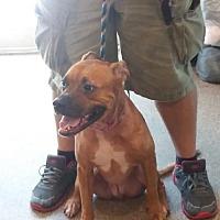 Adopt A Pet :: Precious*F* - Sanford, FL