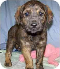 Shepherd (Unknown Type)/Rottweiler Mix Puppy for adoption in Meadow Lake, Saskatchewan - Artemis