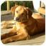 Photo 3 - Retriever (Unknown Type)/Hound (Unknown Type) Mix Dog for adoption in Hagerstown, Maryland - JOSIAH