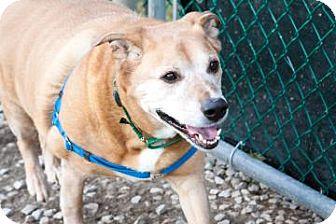 Beagle Dog for adoption in Novelty, Ohio - Sprite