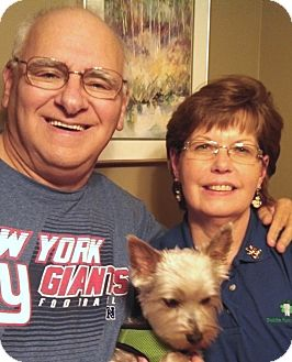 Yorkie, Yorkshire Terrier Dog for adoption in Plain City, Ohio - Simon
