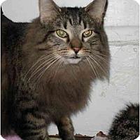 Adopt A Pet :: Purr-dy - Cincinnati, OH