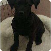 Adopt A Pet :: Kevin - Phoenix, AZ