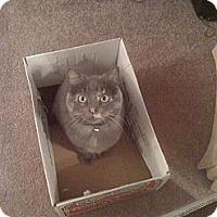 Adopt A Pet :: Hallie - Farmington, AR
