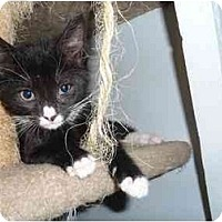 Adopt A Pet :: Widget - North Syracuse, NY