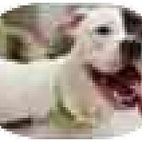 Adopt A Pet :: Marci - Hoffman Estates, IL