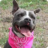 Adopt A Pet :: ATHENA - Carrollton, TX