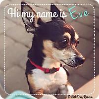 Adopt A Pet :: Eve - Phoenix, AZ