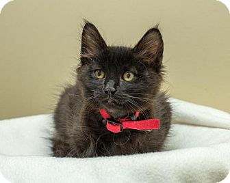 Domestic Mediumhair Cat for adoption in Bellingham, Washington - Dock