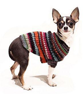 Chihuahua Dog for adoption in New York, New York - Chiquita