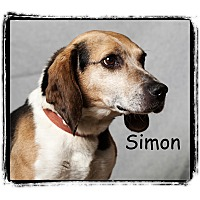 Adopt A Pet :: Simon - Warren, PA