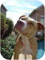 Pit Bull Terrier Mix Dog for adoption in Carrollton, Texas - Princess