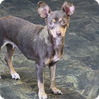 Adopt A Pet :: Sadie - Rockwall, TX