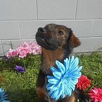 Adopt A Pet :: Reba - Lockhart, TX