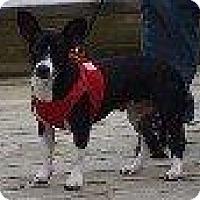 Adopt A Pet :: AIMEE - Hampton, VA