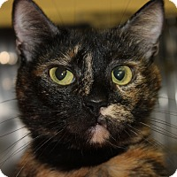 Adopt A Pet :: CAMI - Clayton, NJ