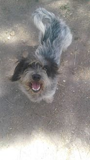 Terrier (Unknown Type, Small)/Dachshund Mix Dog for adoption in Brownsville, Texas - Poindexter