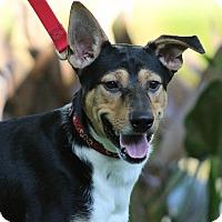Adopt A Pet :: Dimitri - SOUTHINGTON, CT