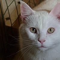 Adopt A Pet :: Shiro - Stafford, VA