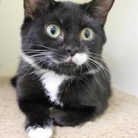 Adopt A Pet :: Liff - Lynchburg, VA