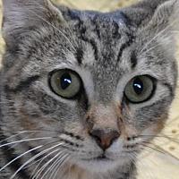 Adopt A Pet :: Genevieve  171813  (Hurricane) - Atlanta, GA