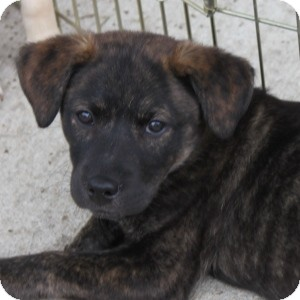 Terrier (Unknown Type, Medium) Mix Puppy for adoption in Naperville, Illinois - Lucy
