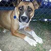 Adopt A Pet :: Sheba - Linton, IN