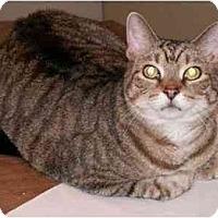 Adopt A Pet :: Leo - Milford, OH