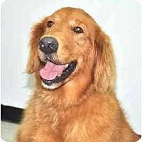 Adopt A Pet :: Sparky - Port Washington, NY