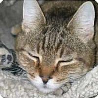 Adopt A Pet :: Squirrel - Alexandria, VA
