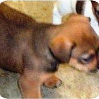 Adopt A Pet :: Puppy 4a - Irvington, KY