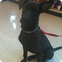 Adopt A Pet :: Jax - Phoenix, AZ