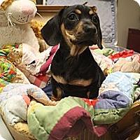 Adopt A Pet :: JC - Hamburg, PA