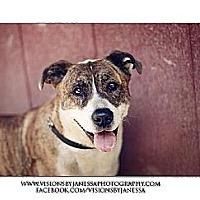 Adopt A Pet :: Queenie - Sacramento, CA