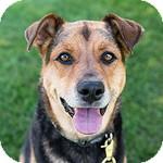 Shepherd (Unknown Type) Mix Dog for adoption in Wheaton, Illinois - Queenie