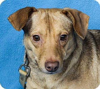 Terrier (Unknown Type, Small) Mix Dog for adoption in Minneapolis, Minnesota - Bailey