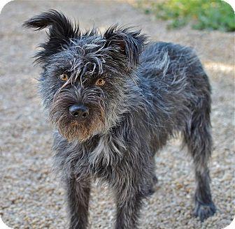 Border Collie/Terrier (Unknown Type, Medium) Mix Dog for adoption in Meridian, Idaho - Freddy