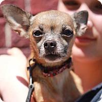 Adopt A Pet :: Annie - San Francisco, CA
