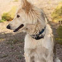 Adopt A Pet :: Sunshine - Cedar Crest, NM