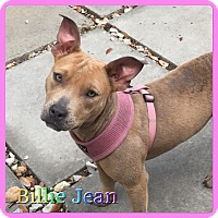 Adopt A Pet :: Billie Jean - Hollywood, FL