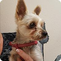 Adopt A Pet :: Mimi - Covina, CA