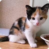 Adopt A Pet :: Liberty - Siren, WI