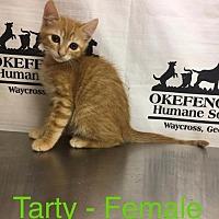 Adopt A Pet :: Tarty - Waycross, GA