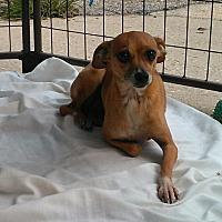 Adopt A Pet :: Minnie Penny - Daleville, AL